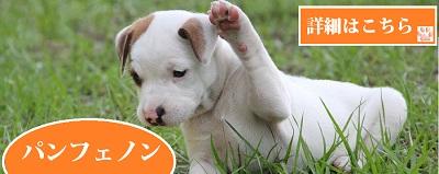 獣医師と開発した犬のサプリメントパンフェノン