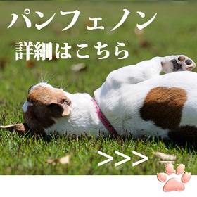 犬のアトピーの改善にパンフェノン